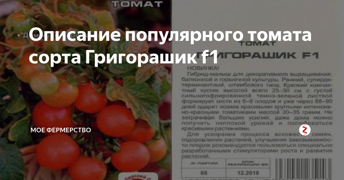 Выращивание томата чудо гроздь
