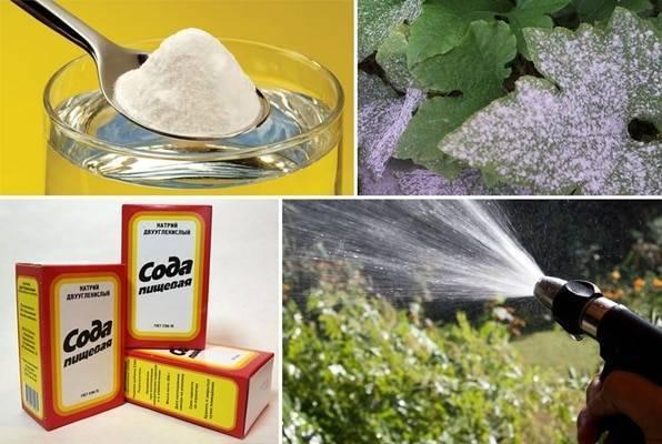 Обработка винограда пищевой содой: правила опрыскивания и пропорции