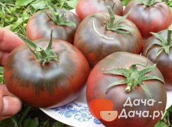 Томат черномор — описание сорта, отзывы, урожайность