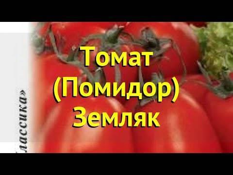 Характеристика и описание томата «земляк»