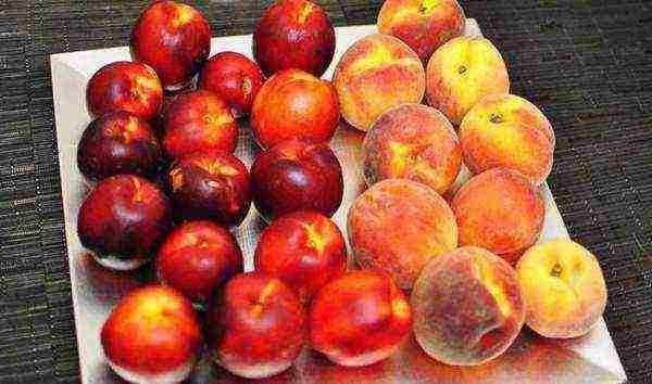 Описание сортов инжирного персика, полезные свойства и выращивание