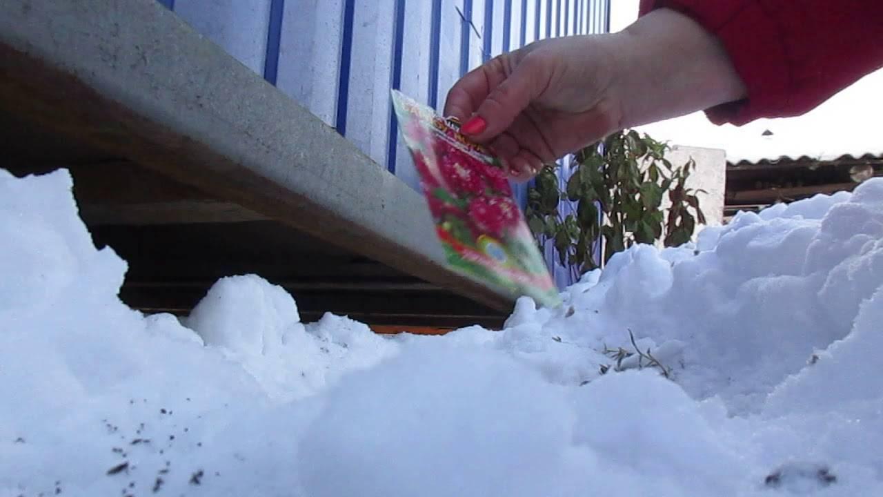 Как правильно обрезать многолетники на зиму – все тонкости осенней обрезки