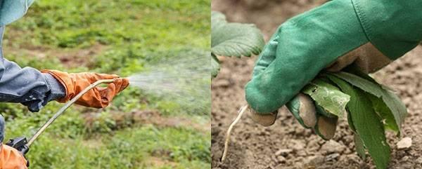 Характеристики и применение гербицидов против сорняков на даче