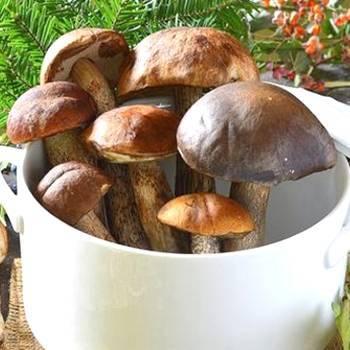Заготовки из подосиновиков на зиму рецепты. подосиновики – рецепты приготовления на зиму