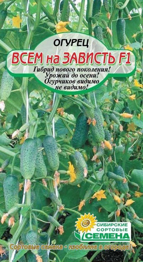 Крепкий и высокоурожайный гибрид огурцов «всем на зависть f1»: фото, видео, описание, посадка, характеристика, урожайность, отзывы