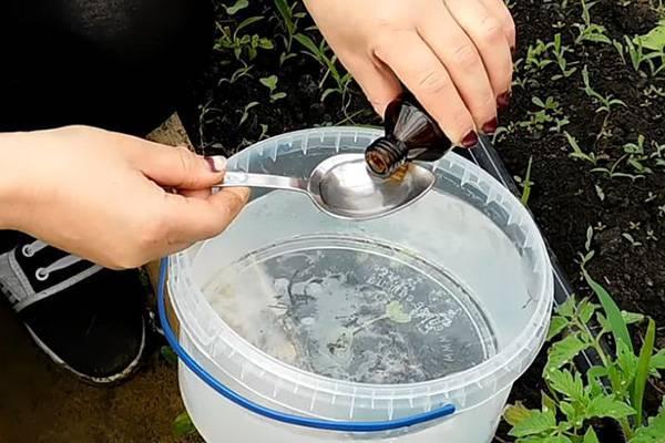 Как подкармливать огурцы в огороде нашатырным спиртоми можно ли?