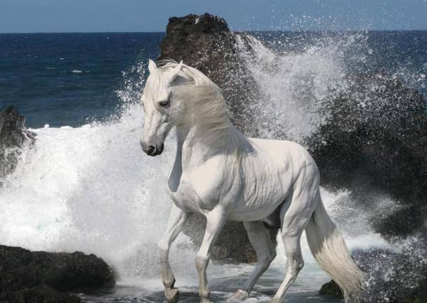Арабские лошади: описание породы, виды и особенности ухода