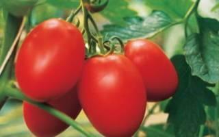 Томаты «исполин малиновый»: сорт с длительным плодоношением