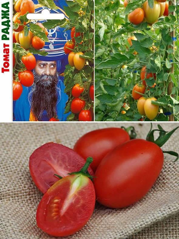Характеристика и описание томата «пабло»