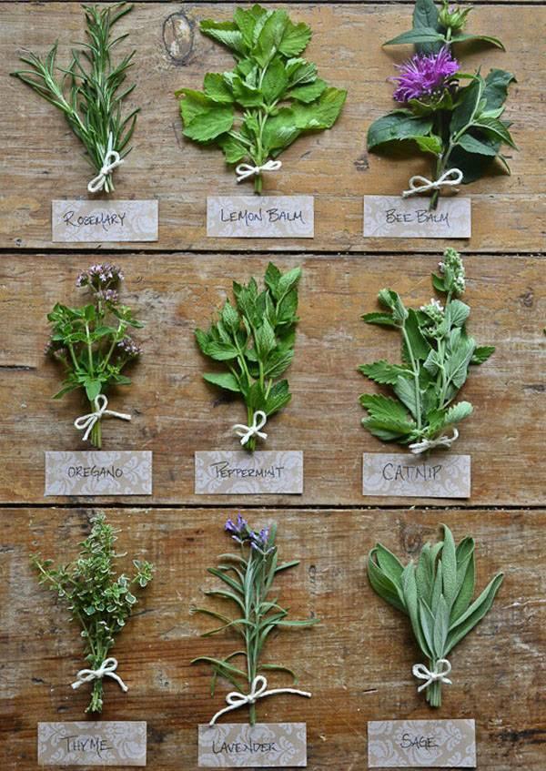 Какие лечебные свойства имеет перечная мята для женщин, есть ли у нее противопоказания и как применять растение?