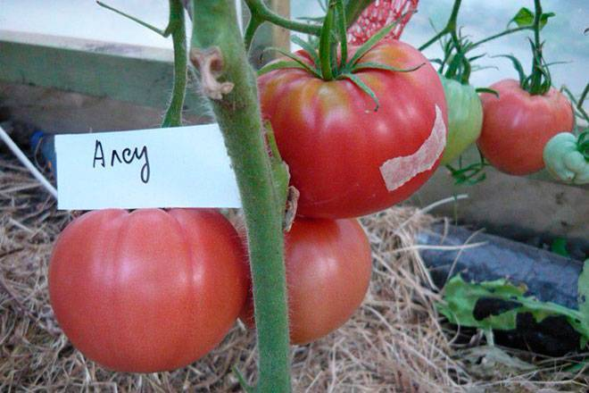 Самые урожайные сорта семян томатов (помидор) для сибири на 2020 год