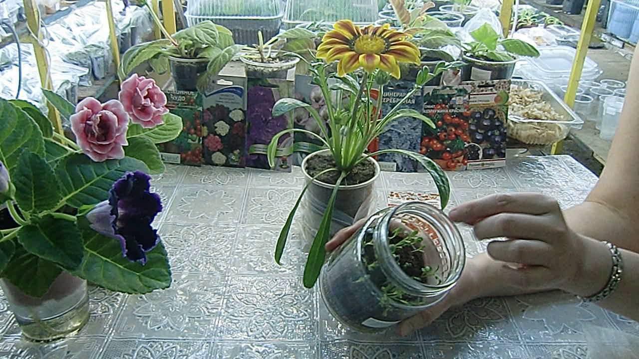 Какие комнатные цветы можно вырастить из семян в домашних условиях?