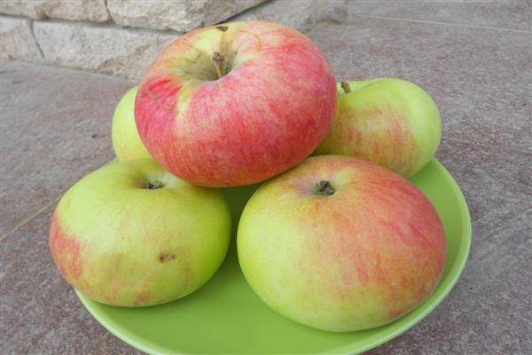 Кисло-сладкие яблоки сорта янтарь отличаются высоким качеством