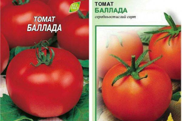 Томат батяня — сорт с сибирским характером