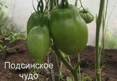 Лиановидные сорта томатов: африканская лиана, розовая, подсинская и сибирская