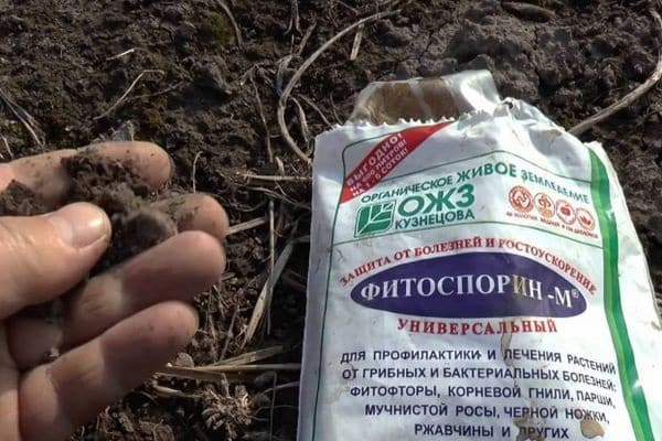 Применение настоя ботвы помидоров от вредителей и для подкормок