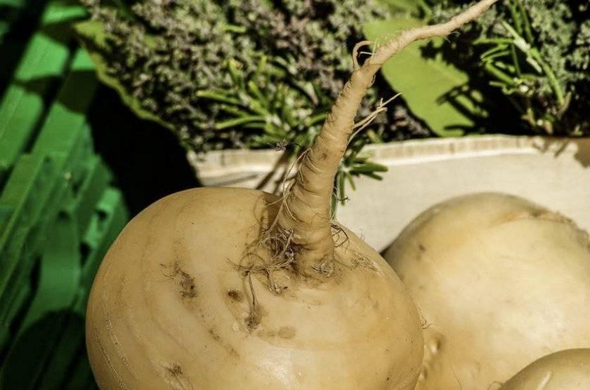 Советы рачительным хозяевам, как сохранить морковь на зиму в домашних условиях. что делать, если нет погреба?