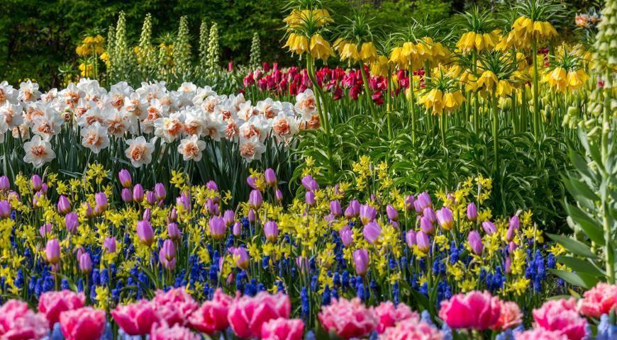 Символ весны – нарцисс: особенности посадки и ухода