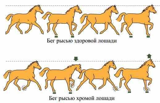 Рысь лошади: виды, характеристики и скорость