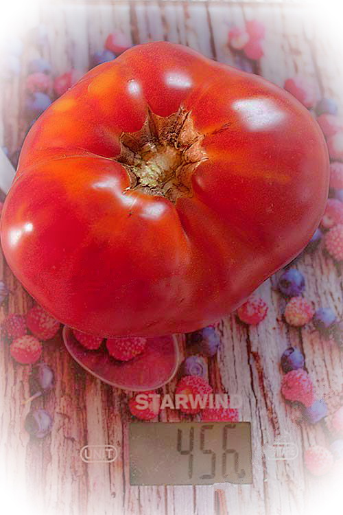 Розмарин фунтовый томат отзывы