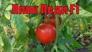 Сорт томата «пинк леди f1»: описание, характеристика, посев на рассаду, подкормка, урожайность, фото, видео и самые распространенные болезни томатов