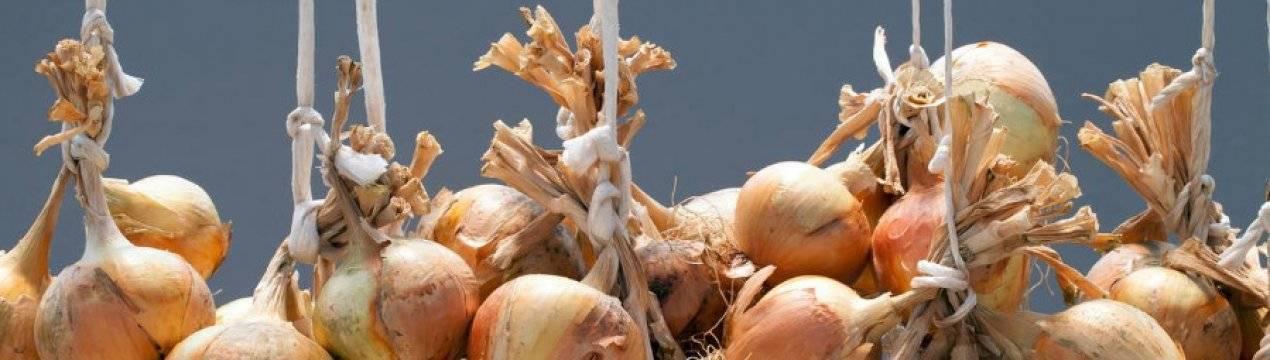 Как хранить зеленый лук?
