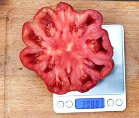 Описание сорта томата Граф Орлов, его выращивания и урожайность