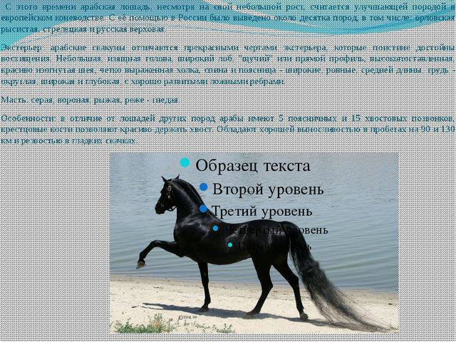 Топ-8 необычных пород лошадей