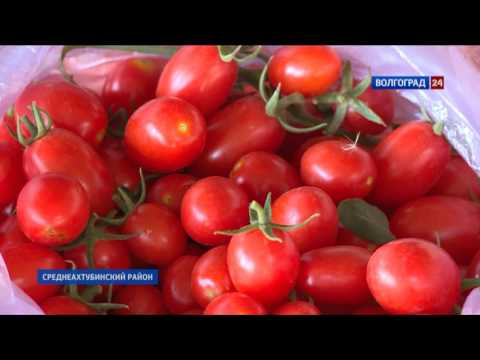 Лучшие сорта томатов на 2020 год: фото и описания