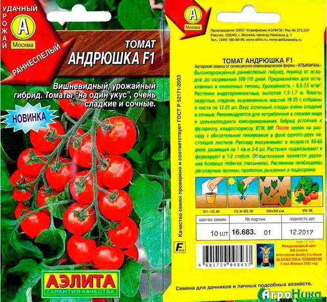 Чио-чио-сан: прекрасный сорт мелкоплодных помидоров