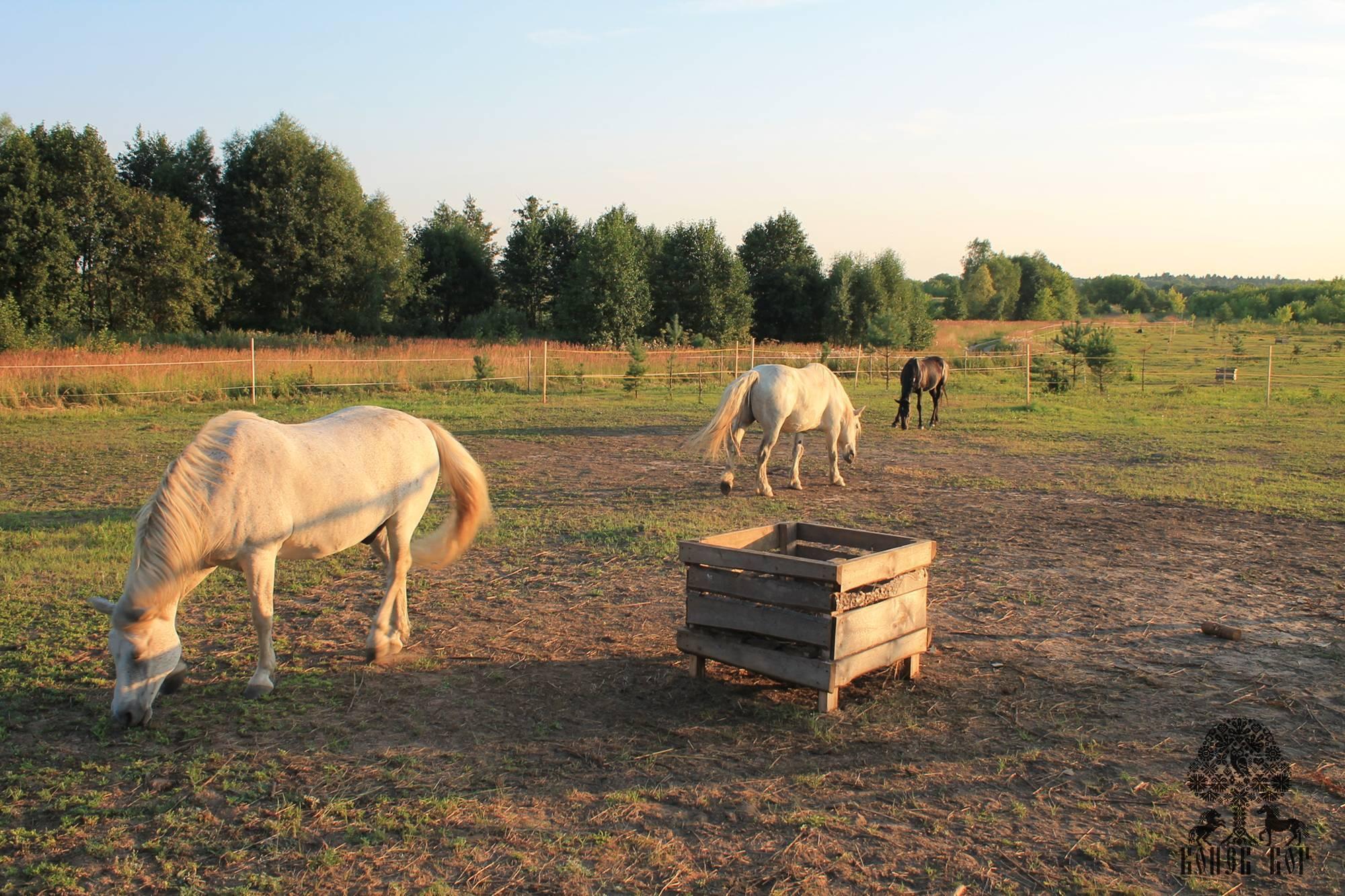 Как правильно содержать и ухаживать за лошадьми?