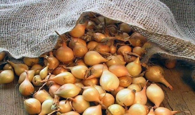 Заготовка репчатого лука на зиму – лучшие рецепты, как сохранить лук в домашних условиях