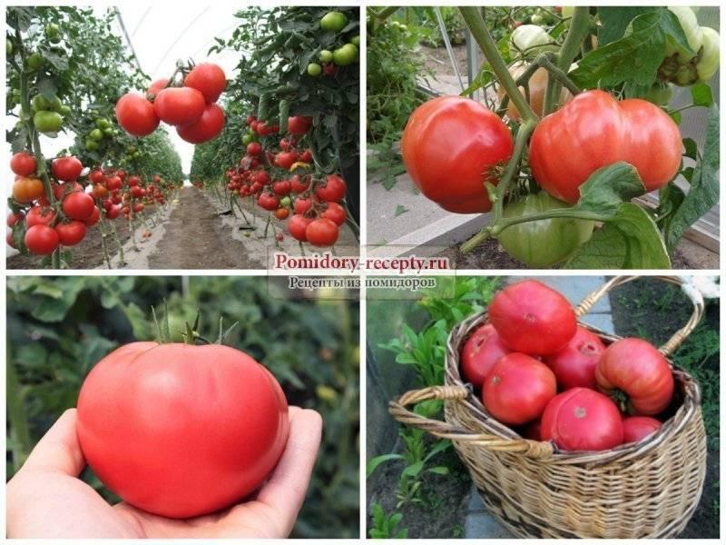 Коррида с томатами: характеристика и описание сорта «бычье сердце красное»