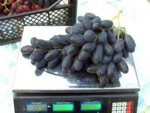 Сорта винограда
