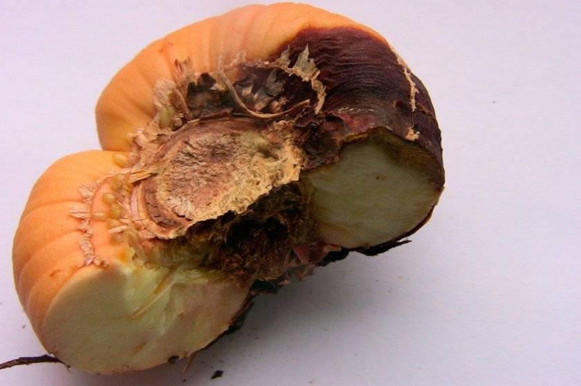 Почему у гладиолусов искривляются стебли и как с этим бороться?