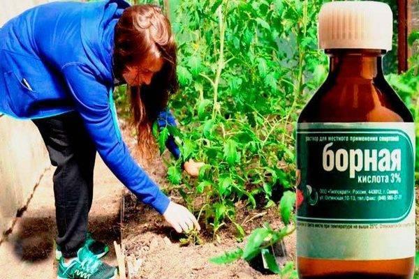 Как развести борную кислоту для огурцов для опрыскивания – пропорции и дозировки