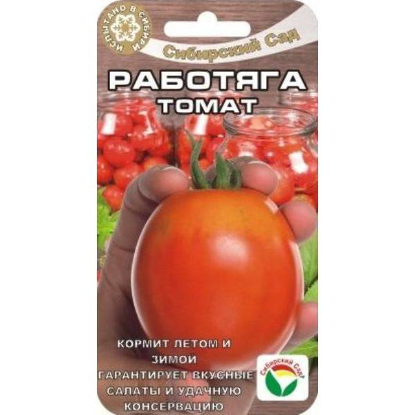 Забываем о рассаде с сортом помидор «безрассадный»: описание томатов, особенности выращивания