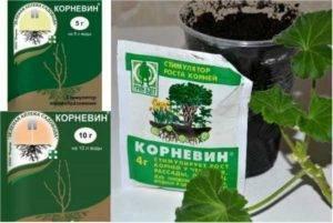 Корневин — инструкция по применению для рассады, комнатных растений, черенков винограда, видео