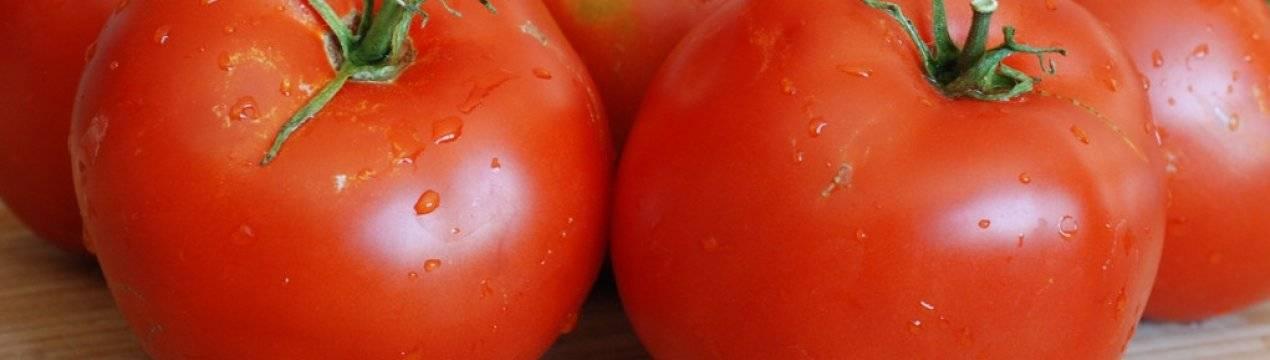 Томат самара: характеристика и описание сорта, урожайность с фото