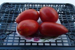 Вас порадует сладкий, нежный вкус плодов — томат «королевский пингвин»: описание сорта