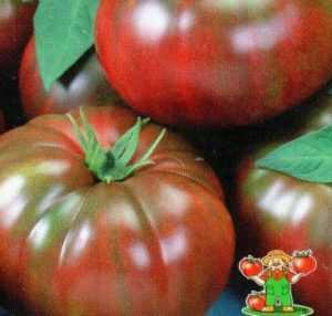 """Сорт томата """"зефир в шоколаде"""": отзывы, описание, достоинства и недостатки, выращивание"""
