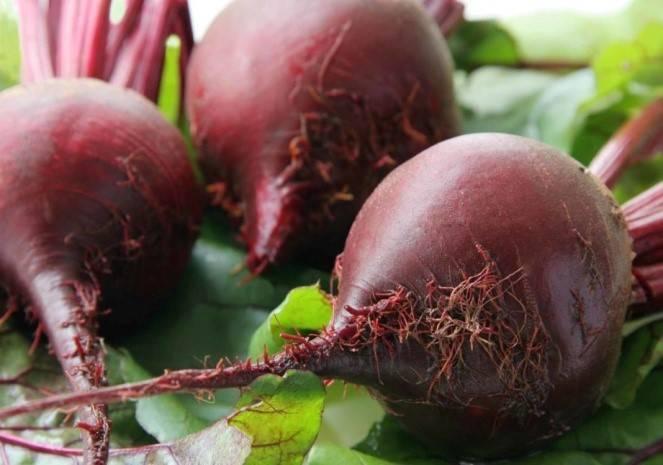 Пошаговое руководство по выращиванию листовой свеклы