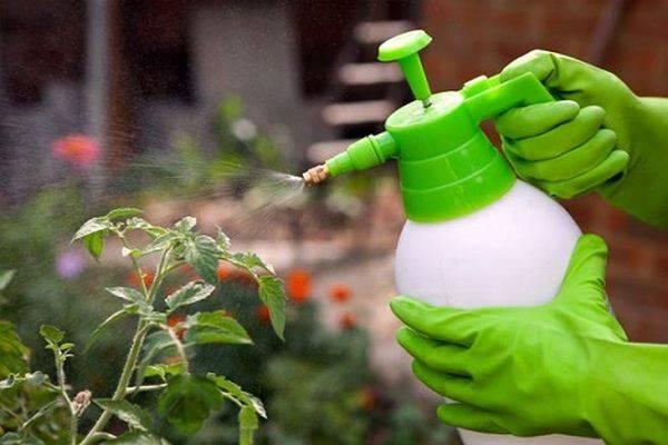 Как и для чего проводить опрыскивание помидоров молоком с йодом и борной кислотой: рецепт и советы опытных дачников