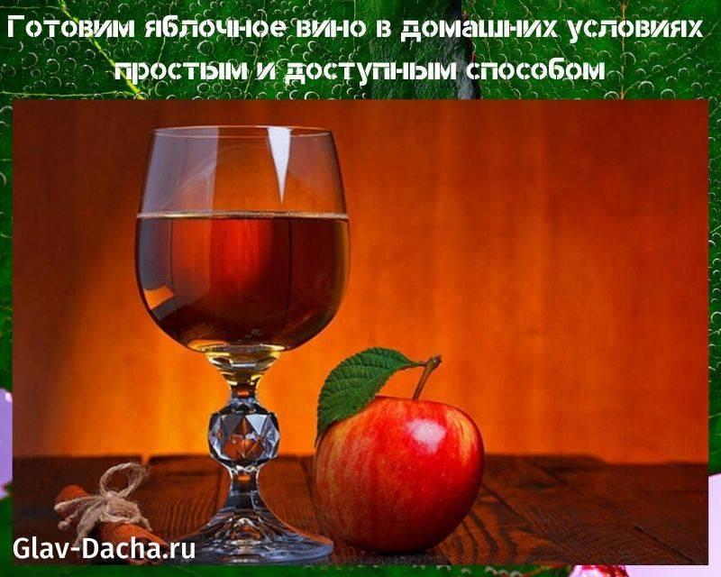 Вино из ревеня в домашних условиях: простой рецепт приготовления, сроки хранения