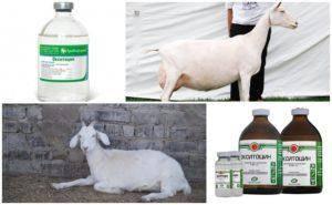 Окситоцин инструкция по применению для овец. окситоцин для животных инструкция по применению