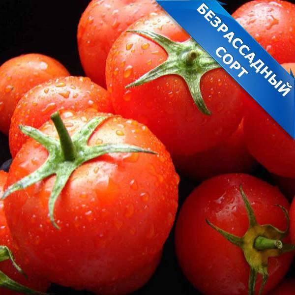 Томат очарование — описание сорта, урожайность, фото и отзывы садоводов