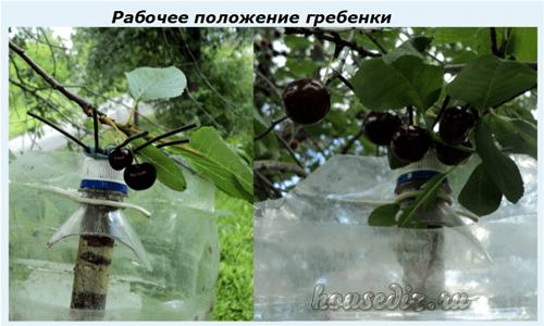 Как сделать приспособление для сбора вишен с высокого дерева своими руками