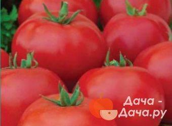 Томат спиридон: характеристика и описание сорта, его урожайность с фото