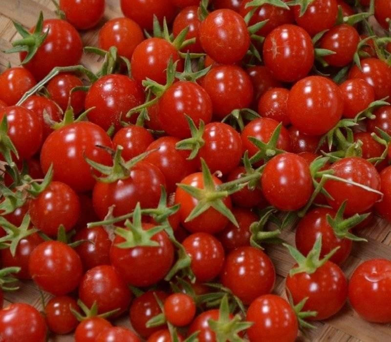 Томат алые свечи: характеристика и описание сорта урожайность, отзывы фото