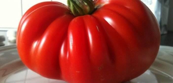 Биф-помидоры: характеристика, лучшие сорта